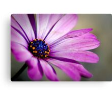 Pushing up daisy Metal Print