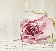 French Lace Rose by Evelyn Flint - Daydreaming Images
