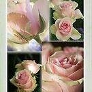 rose quartet for A.W. by picketty