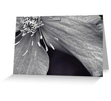 Clematis in Monochrome II Greeting Card