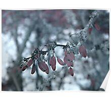 Stillness Of Winter Poster