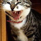 Cat Yawning by ccsad