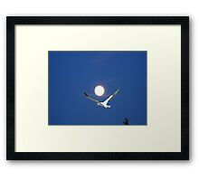 Moon and bird (Ganet) Framed Print