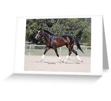 Race Horse being worked Greeting Card