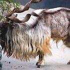 Markhor Goat  by loiteke