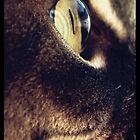 What A Feline Sees. by Arduous