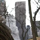 New York City - Enjoying a muffin in Central Park by Creative Windmill Photography