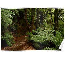 Fern Walk,Otway Ranges Poster