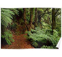 Lush Fern Walk,Otway Ranges Poster