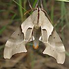 Moth by Andrew Trevor-Jones