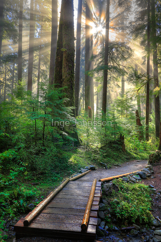 Pathway into the Light by Inge Johnsson