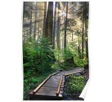 Pathway into the Light Poster