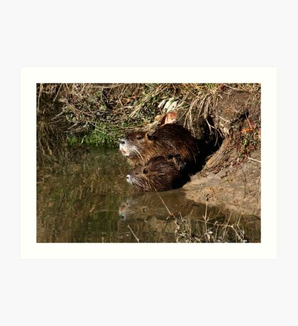 Nutria Trio & Reflection Art Print