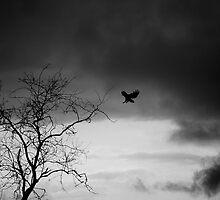 Redtail landing, b&w silhouette by Allan  Erickson