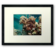 Dwarf lionfish Framed Print