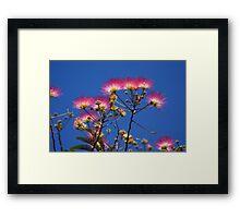 Pretty Mimosa Framed Print