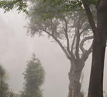 February Morning Fog by heatherfriedman