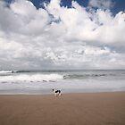 surf patrol by wellman