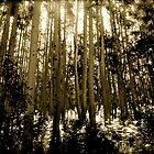 A Darkly Lit Forest by russtokyo