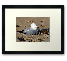 Playful youngster Framed Print