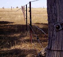 Fence Post by edwinaC