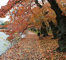 Fall - Washington DC Lake by DanielRyan