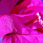 Bougainvillea by Jessica Hacking