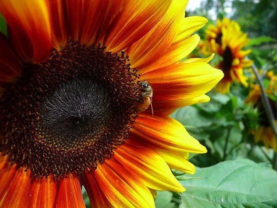Bee Seeing You by Georgie Hart