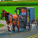 Amish Summer Stroll  by Monte Morton