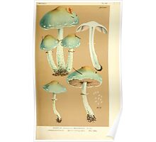 Illustrations of British Fungi by Mordecai Cubitt Cook 1891 V4 0407 AGARICUS  STROPHARIA  AERUGINOSUS Poster