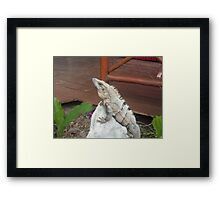 Iguana on rock in Playa del Carmen, Mexico Framed Print