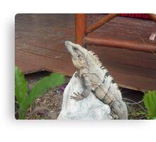 Iguana on rock in Playa del Carmen, Mexico Canvas Print