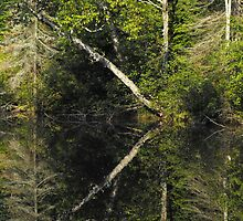 Early Fall Reflections by Tracy Faught