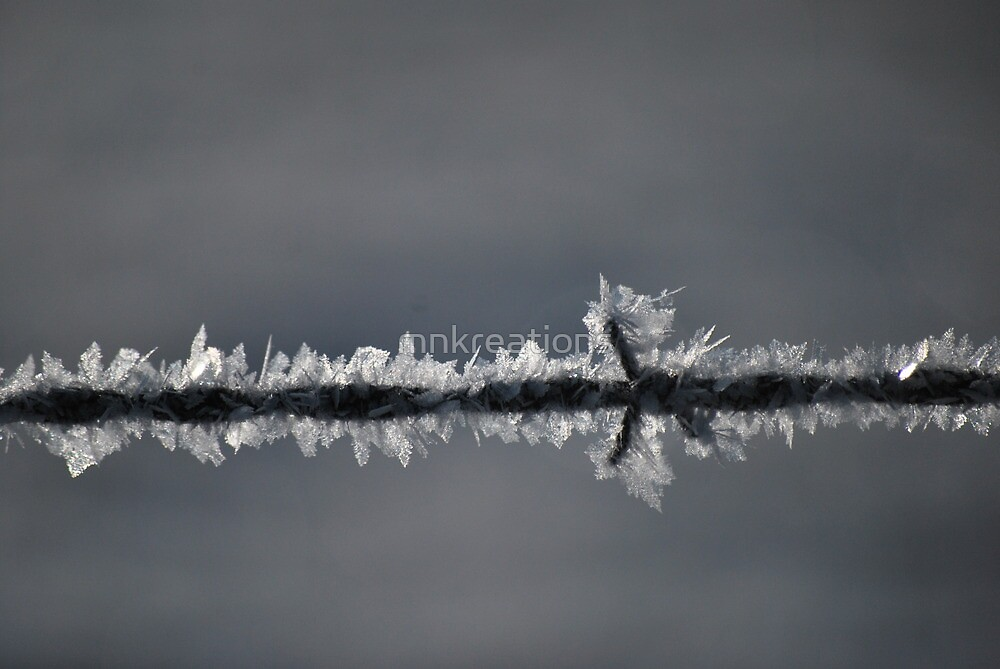 Frost On the Wire by mnkreations