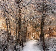 Deer Path in the Snow by Ann Garrett
