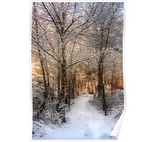 Deer Path in the Snow Poster