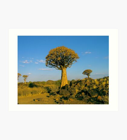 quiver tree in the setting sun Art Print