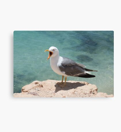 Seagull by water Canvas Print