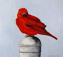 Orange Red Cardinal On A Post by max1cate