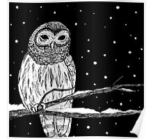 Barred Owl in Snow Poster