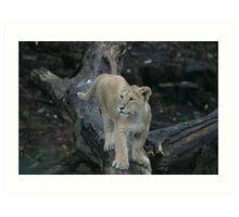 Young lion cub Art Print