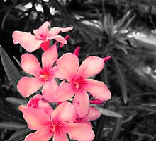selective color-flowers by Kelly Case