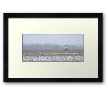 Snowy Owl - peek a boo! Framed Print