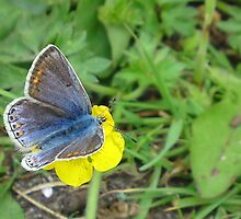 Flutter by by Patrick Noble