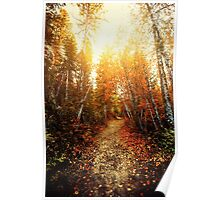 Red Forest, Washington in November Poster