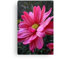 Hot Pink Lover Canvas Print