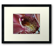 Orchid..Charlie Brown Framed Print