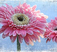 Gerberas in the Sky by Barb Leopold