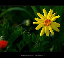 Naturelle by Gianluca Perrone