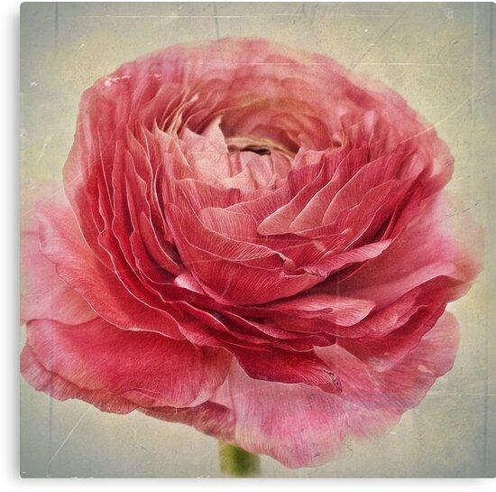 Dusty pink by Priska Wettstein